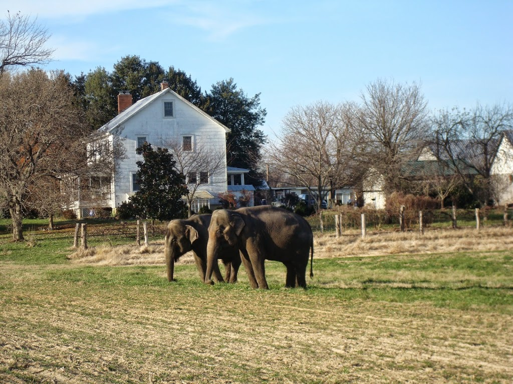 Move By Yourself: The Day The Elephants Came To Town