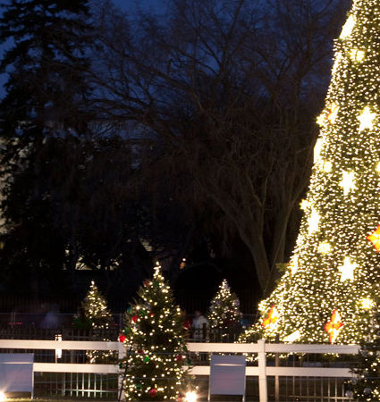 7 of the Best Holiday Activities in Washington DC